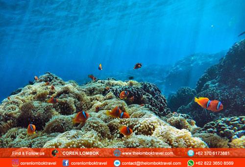 Snorkeling Trip To Gili Kondo, Gili Kapal And Gili Lampu